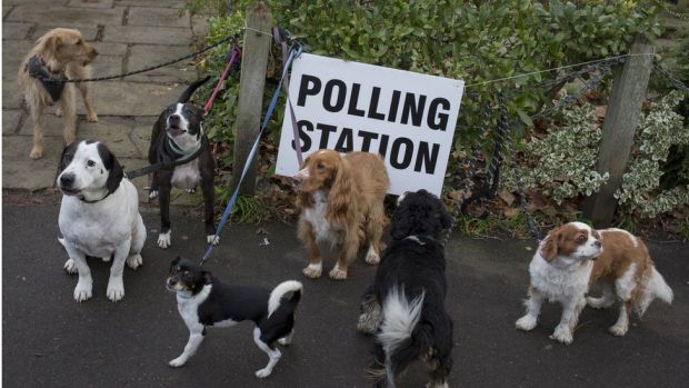 Dogs waiting outside a polling station