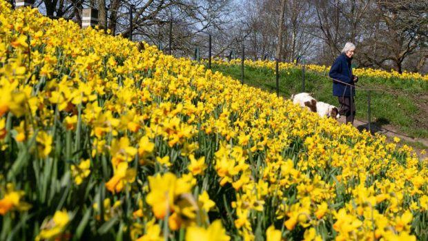 Woman walking dog in park
