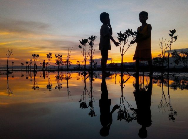 A silhouette of two children standing amongst mangrove saplings as the sun sets in the Philippines