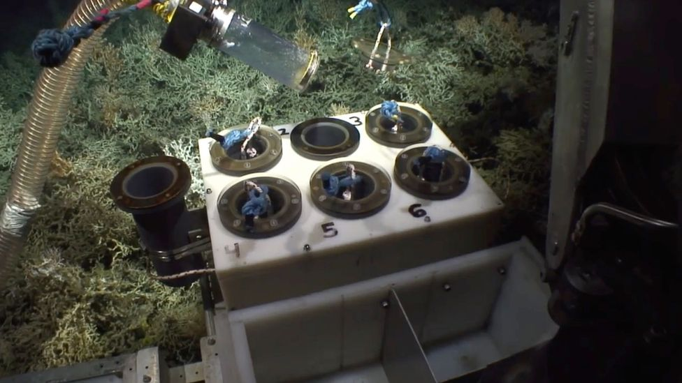 Underwater robots collecting samples