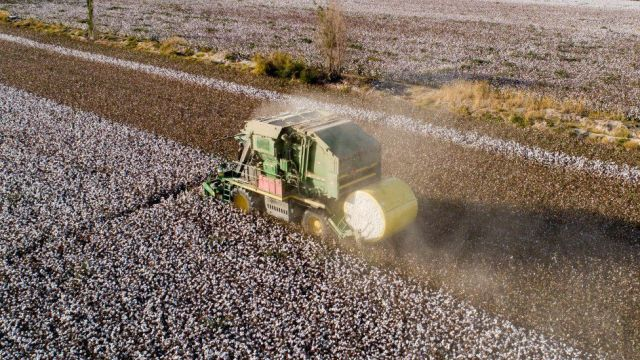 Cotton harvester in Xinjiang