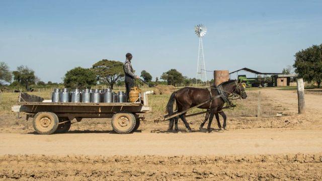 Homem transportando galões de leite em carroça em Manitoba