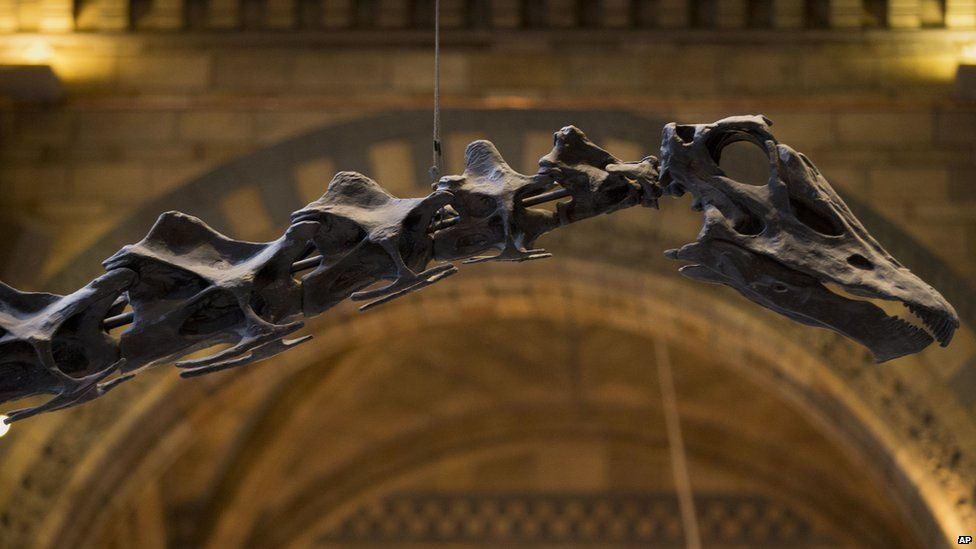 Dippy the diplodocus skeleton