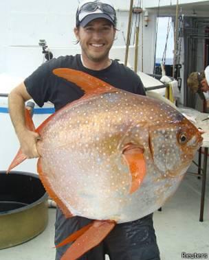 Ejemplar de pez luna real