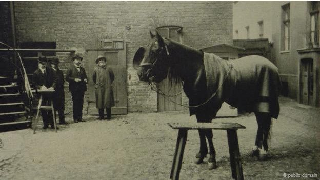 Hans, el caballo