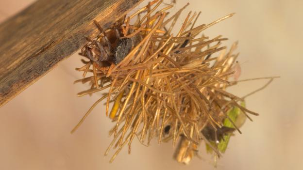 Caddisflies build many kinds of nests (Credit: Neil Phillips/Alamy Stock Photo)