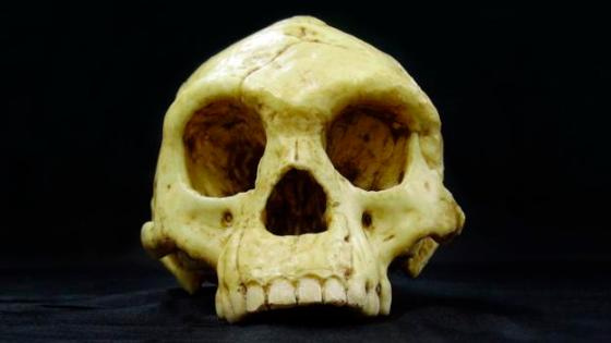 This skull was found in 2003 in the Liang Bua cave, Flores (Credit: Laurent Orluc/SPL)