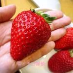 イチゴ探偵|高橋みなみの「これから、何する?」で紹介した【ラブソング】&【ひな苺】のケーキをカフェコムサで!