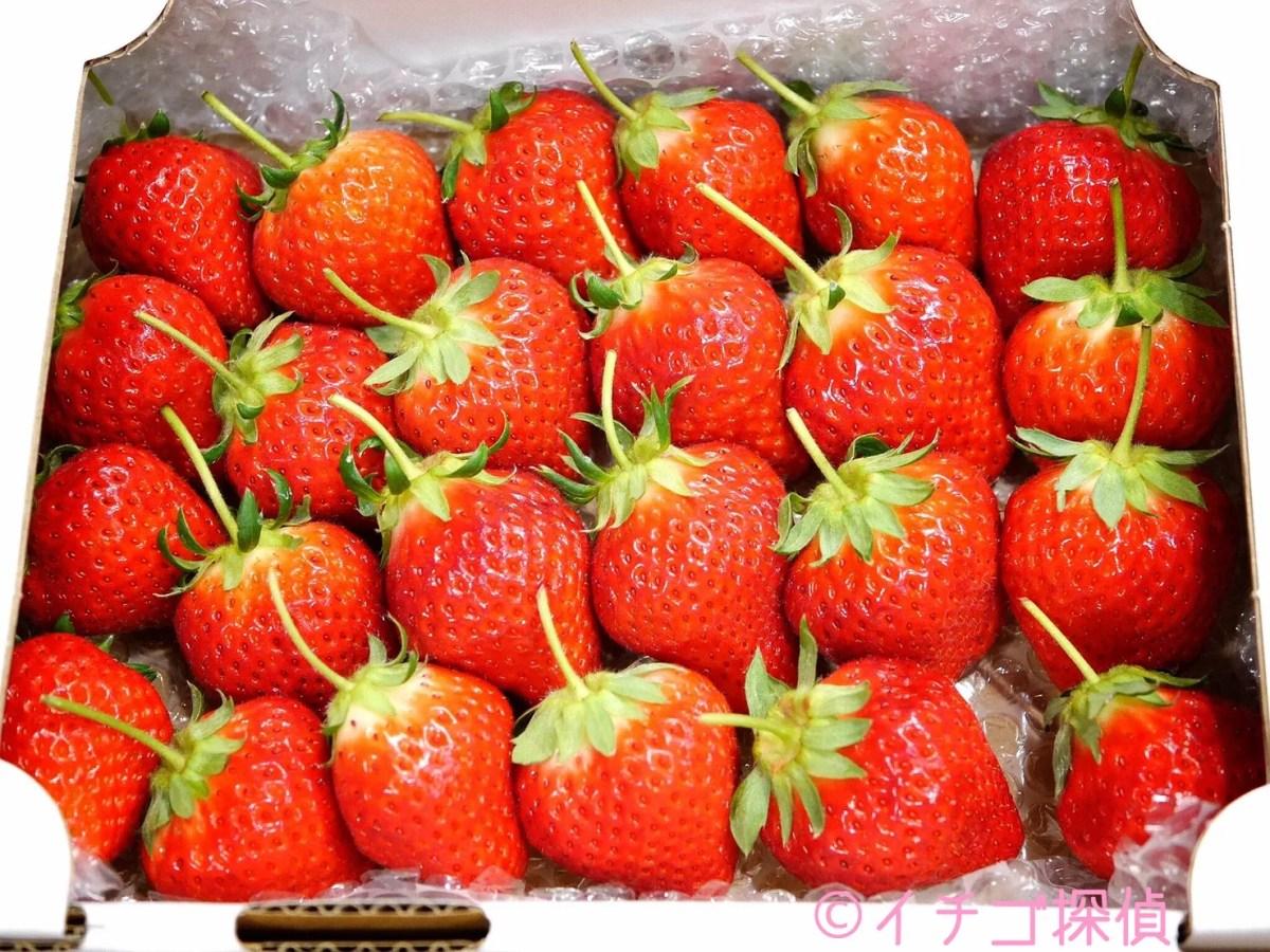 イチゴ探偵|全国でわずか5%【ベリーベリー】という名の希少な女峰苺を実食!香川産の箱入り蔓付き高級いちご!