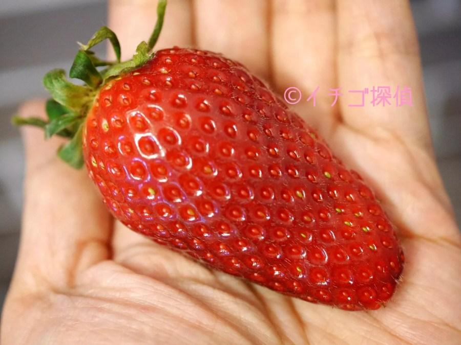 イチゴ探偵|信州のブランドいちご【しなのベリー】を初体験!長野県産の美しい完熟いちご!