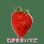 イチゴ探偵|わがままいちご品種図鑑・断面図