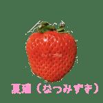 イチゴ探偵|夏瑞(なつみずき)品種図鑑