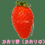 イチゴ探偵|かおり野(かおりの)品種図鑑・断面図