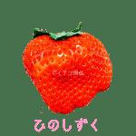イチゴ探偵|ひのしずく品種図鑑・断面図