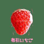 イチゴ探偵|布引いちご品種図鑑・断面図