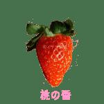 イチゴ探偵|桃の香品種図鑑・断面図