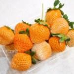 イチゴ探偵|サーモンピンク色で桃の香りのいちご【桃薫】を相葉苺園で購入!希少な桃薫を楽天市場で販売している店も!