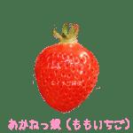イチゴ探偵|あかねっ娘品種図鑑・断面図