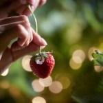 星野リゾート リゾナーレ熱海で2019年も「ナイトストロベリーデート」開催!甘く熟した「愛の一粒イチゴ」を探せ!