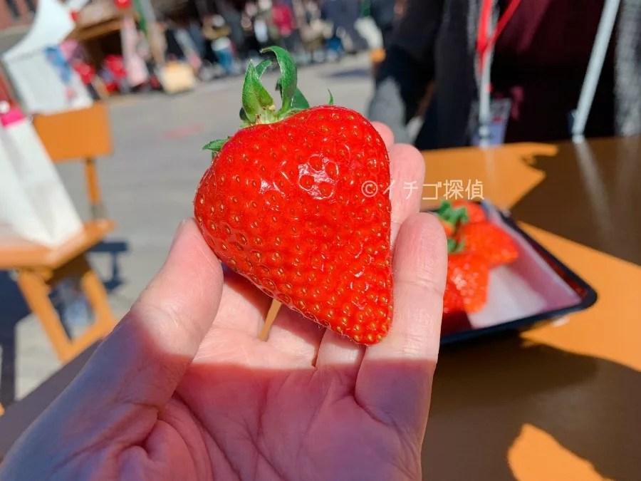 岡山県産のいちご【晴れ娘】をヨコハマストロベリーフェスティバルで購入!いちごちゃんベレーも!