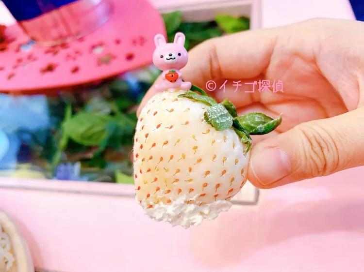 \実食/『浅草よろず茶屋444』いちごの雪化粧パフェで3種の白いちご食べ比べ!パンケーキパフェも!