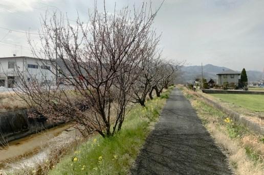 towards Eifukuji (#57)