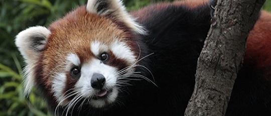 GWに江戸川区自然動物園に行ってきました
