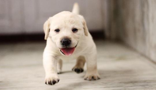 犬の爪切りをすると暴れるんだけどどうしたらいいの?