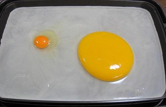 ダチョウ 卵 目玉焼き