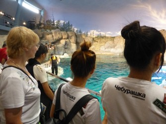 At the beluga whale training