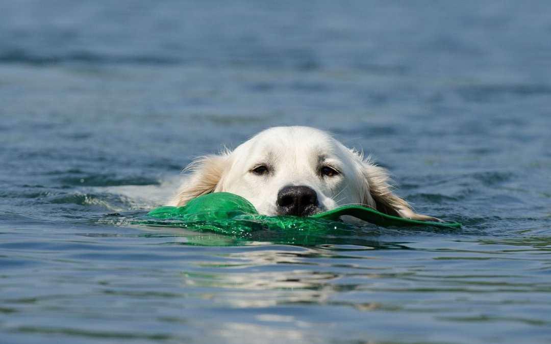 Kreuzfahrt mit Hund: Das erwartet Sie