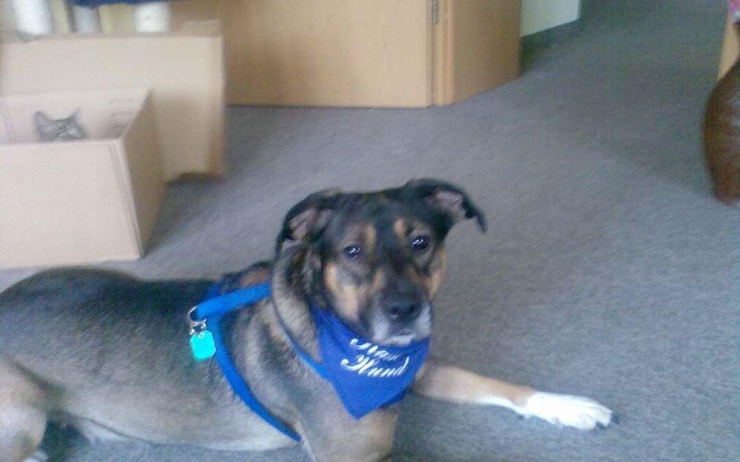 Hunde Foto: Regina und Dana – Mein neues Halstuch ♥