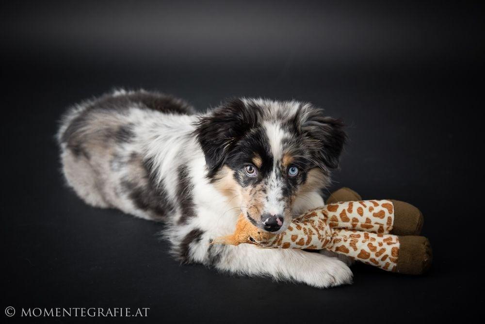 Hunde Foto: Uli und Coco – Mein Lieblingsspielzeug