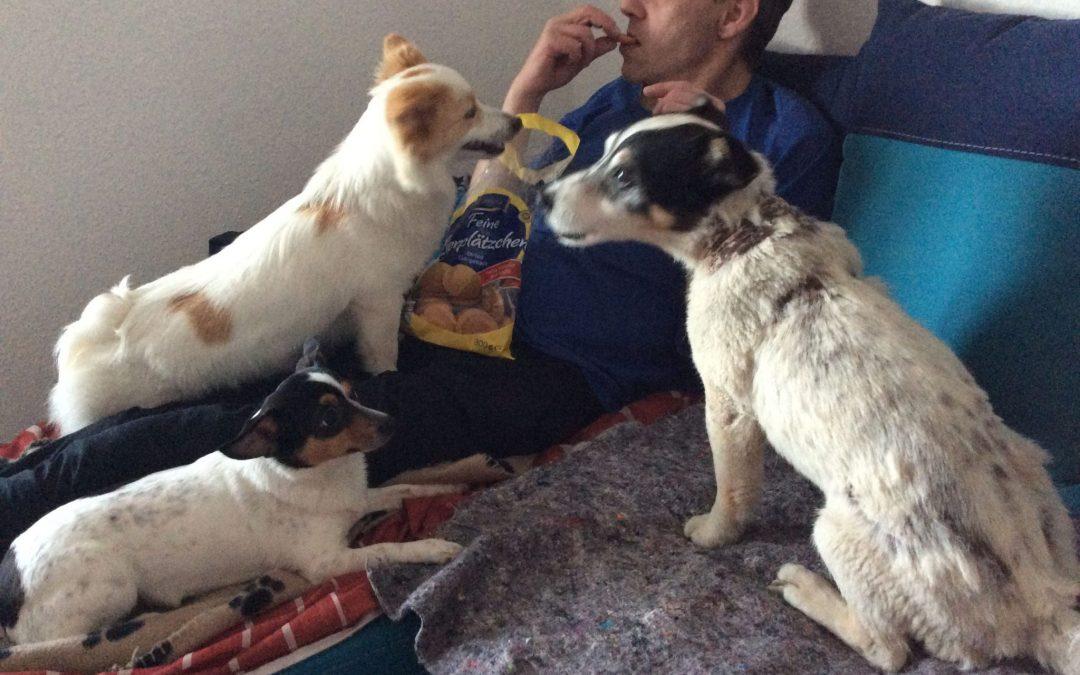 Hunde Foto: Magdalena und Papa Tobi,Mama Kira und Tochter Emmy – Meine Hundefamilie
