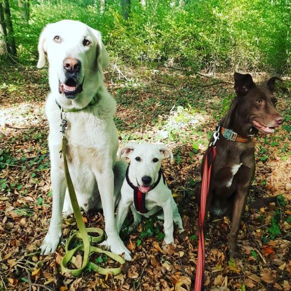 Hunde Foto: Melanie und Scotty, Maggy und Kira - Die drei von der Tankstelle