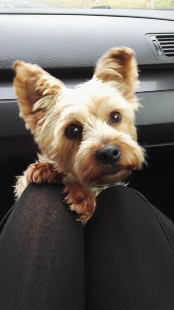 """Hunde Foto: Kamilla und Lucky - Der """"bitte-lass mich auf den schoß"""" - Blick"""