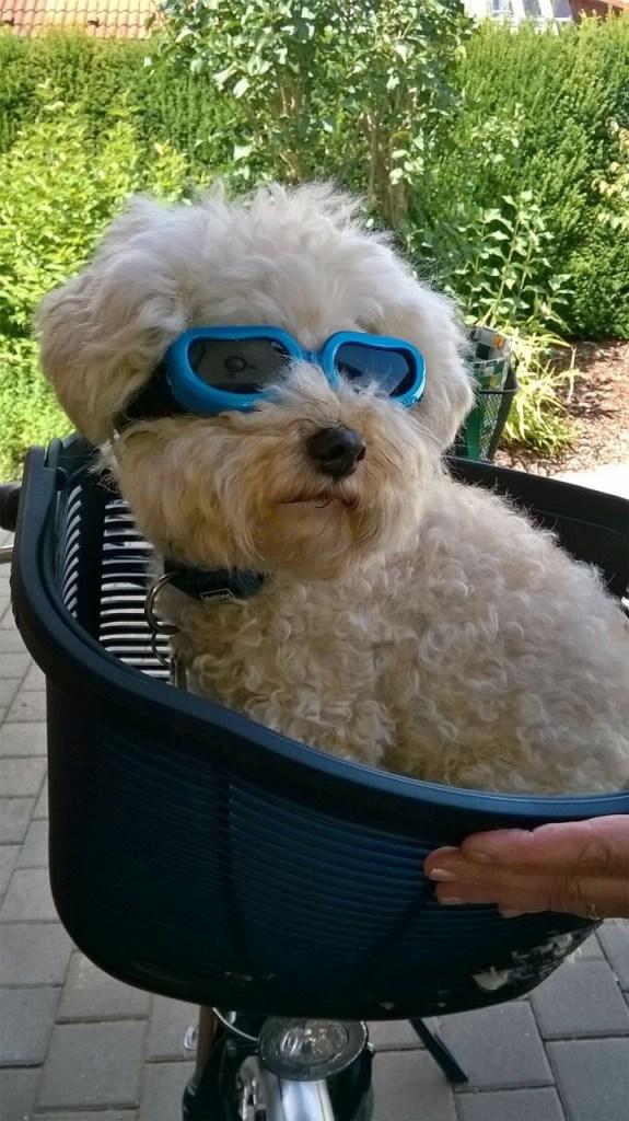 Hunde Foto: Rita und Bruno - Finde es Geil im Fahrradkorb