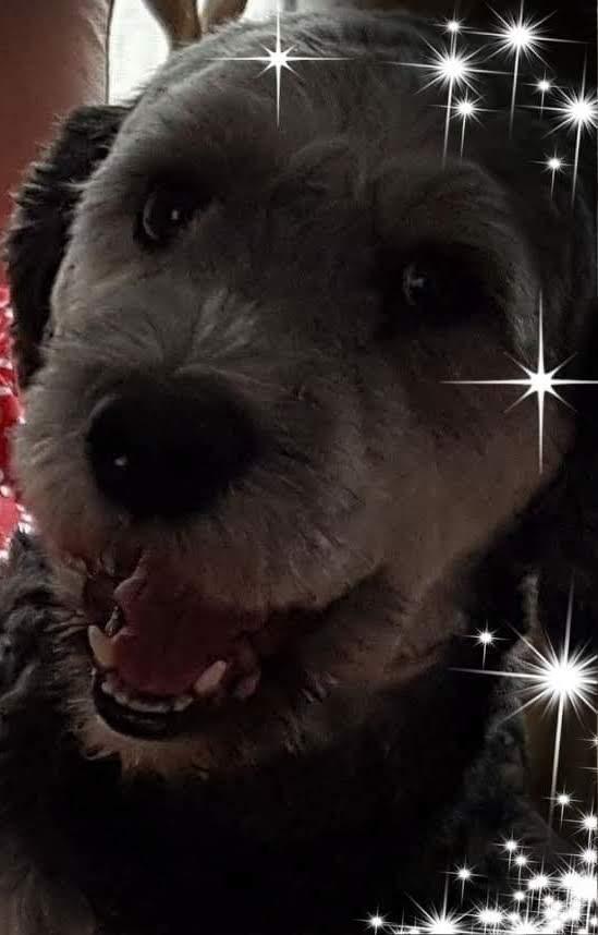 Hunde Foto: Sieglinde und Jimmy - Meine süße Fellnase jimmy