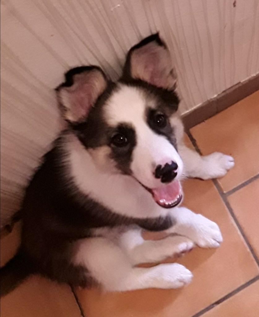 Hunde Foto: Melanie und Tacito - Der kleine Frechdachs