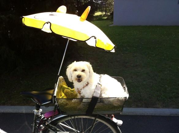 Hunde Foto: Claudia und Elli 🥰 🐾 - Fährt sehr gerne mit dem Fahrrad! 😅