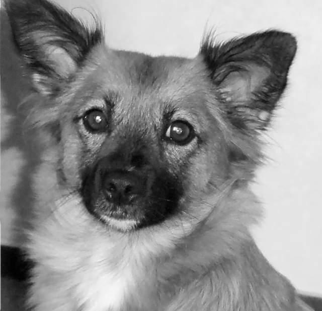 Hunde Foto: Ralf und Luna – Schwarz/Weiß ist besser