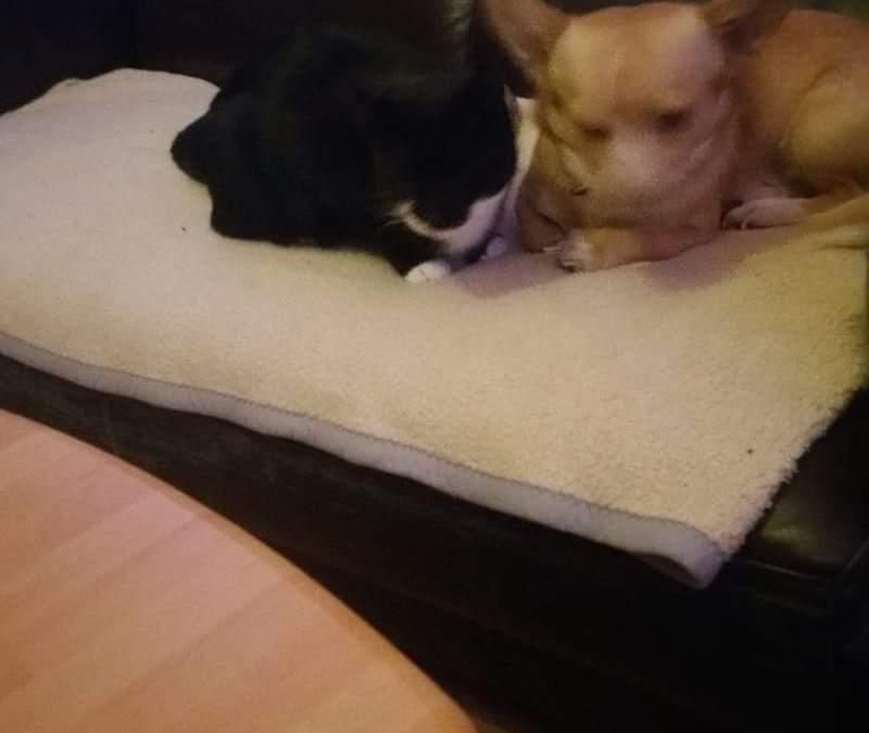 Hunde Foto: Dirk und Spike – Meine Freundin
