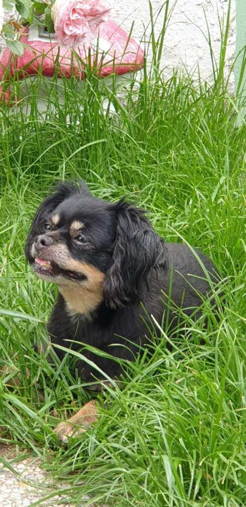 Hunde Foto: Babsi und Mausi - Meine süße Maus