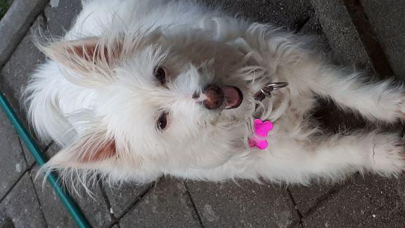 Hunde Foto: Moni und Bella - bella geniesst den Sommer .....