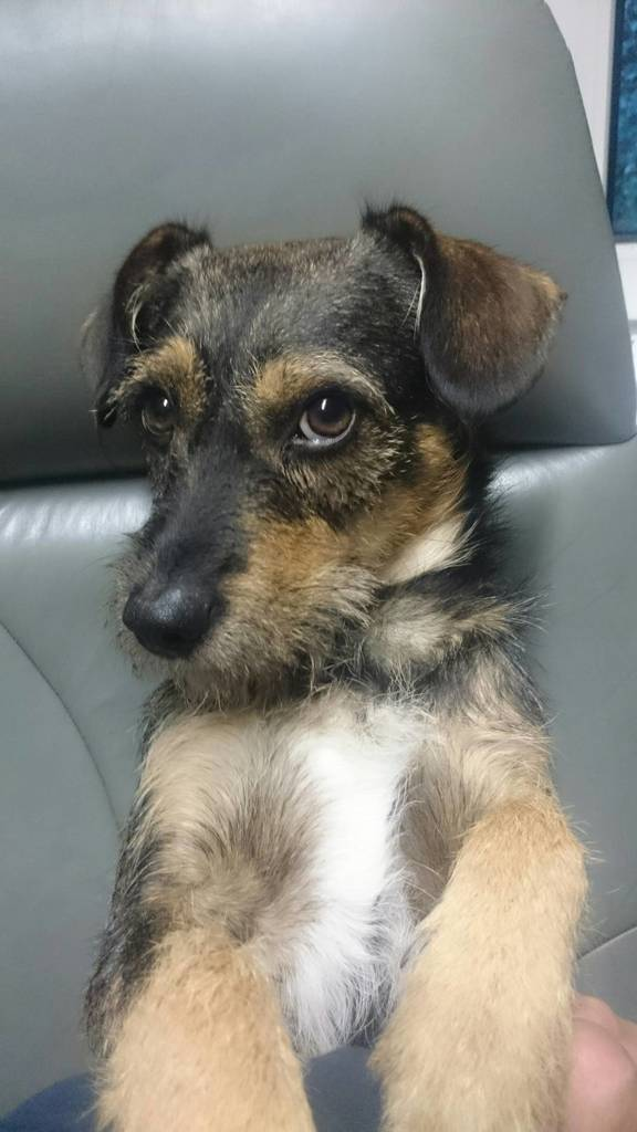Hunde Foto: Heinz und Ernie - Sag mir einfach bescheid