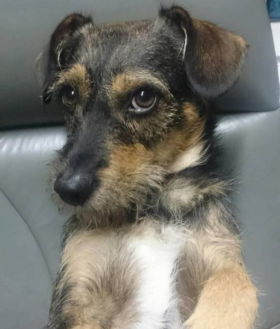 Hunde Foto: Heinz und Ernie – Sag mir einfach bescheid