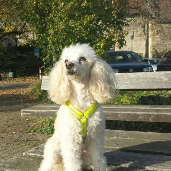 Hunde Foto: Brigitte und Charly - Ich bin doch fast ein Model