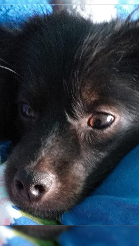 Hunde Foto: Doris und Pico - Pico unser Sonnenschein ☀