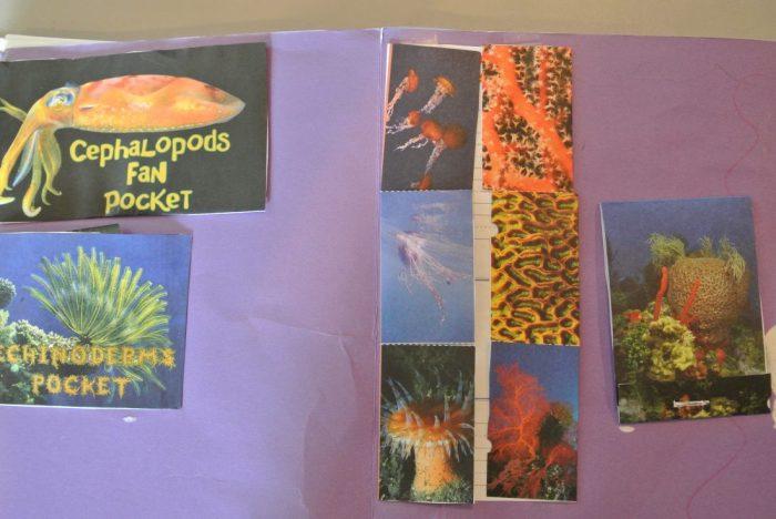 Apologia Zoology 2 Lapbook 005