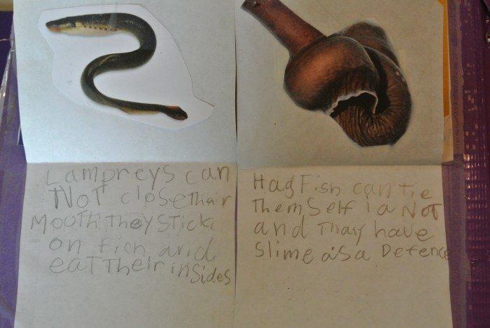 Apologia Zoology 2 lapbook 009